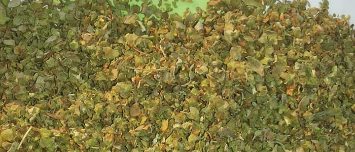 marjoram green leaves dried