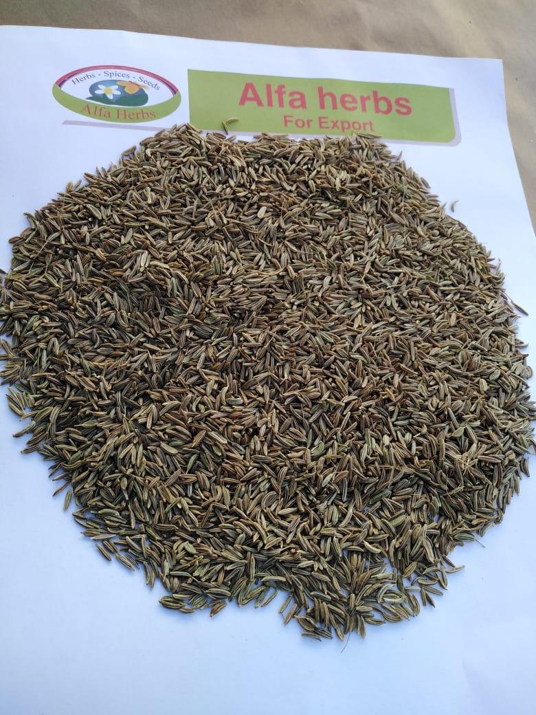 caraway seeds new season
