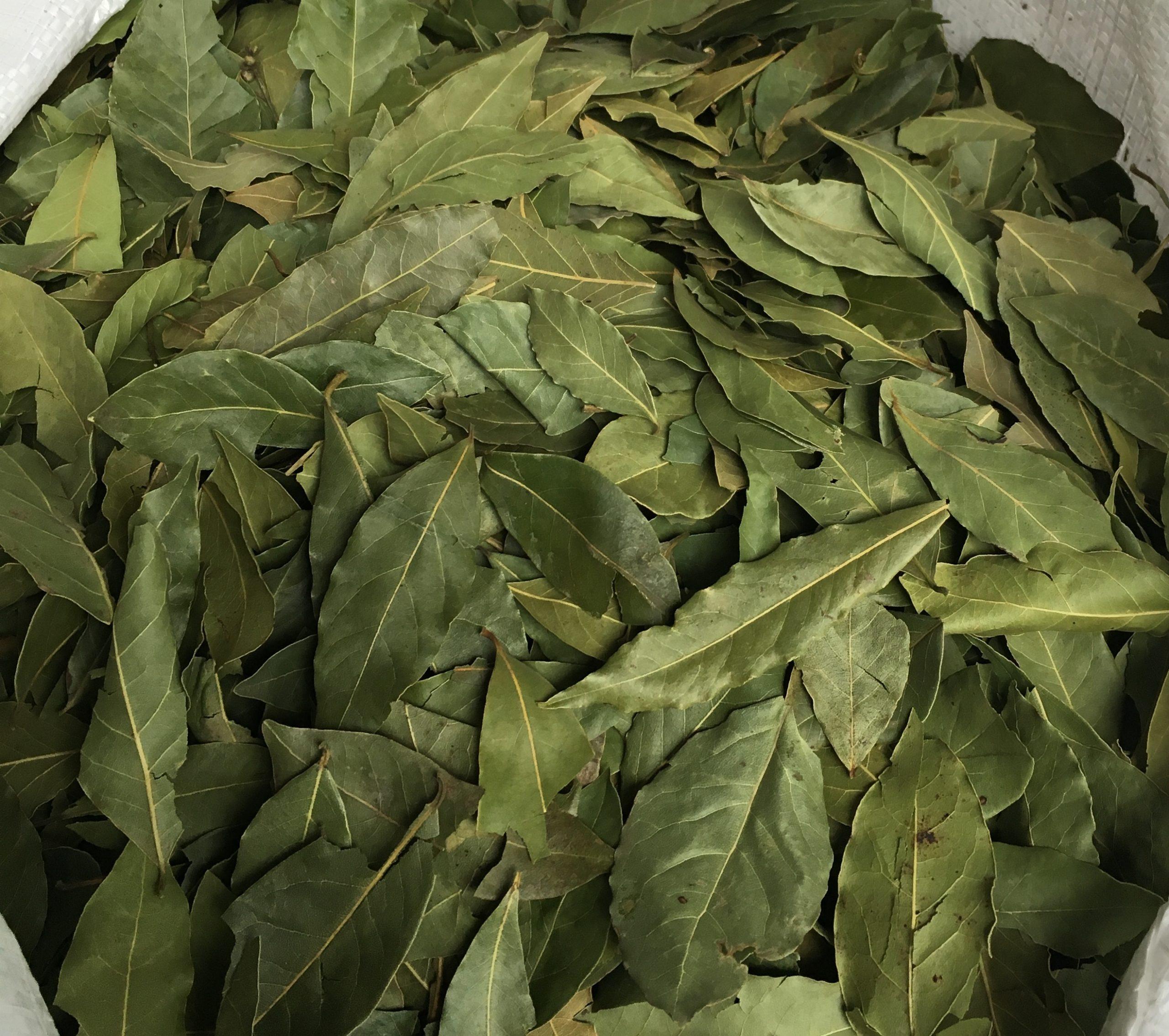 bay leaves, laurel leaves